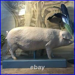 Rare vintage SOMSO PIG educational didactic model anatomical school model 1950s